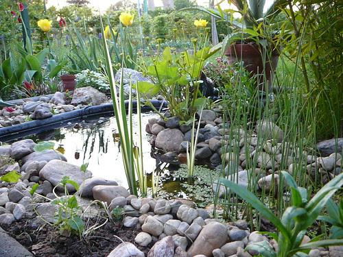 Umgestaltung des Teichs (06)