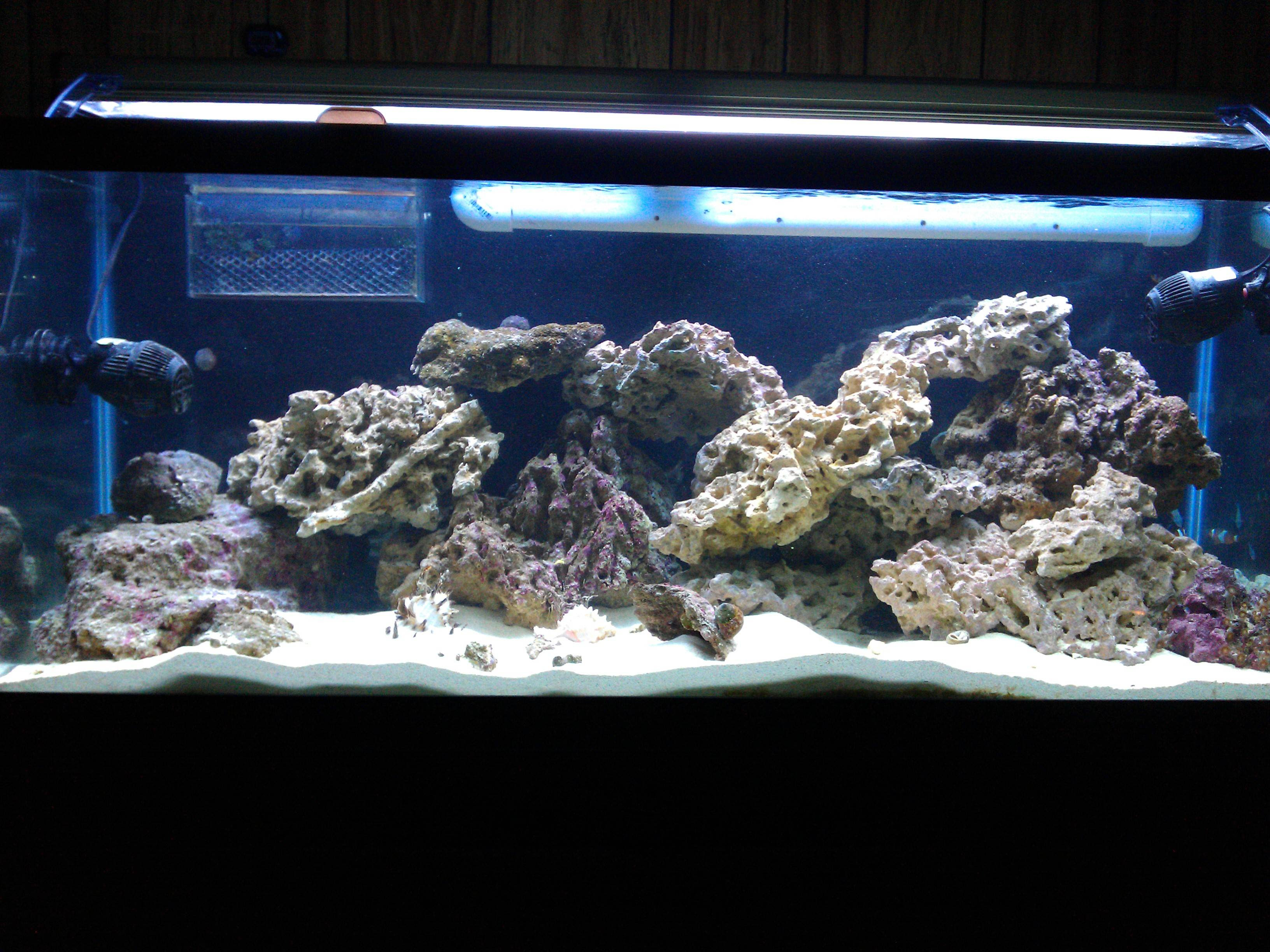Aquascaping Reef Tank Ideas - Aquascape Ideas