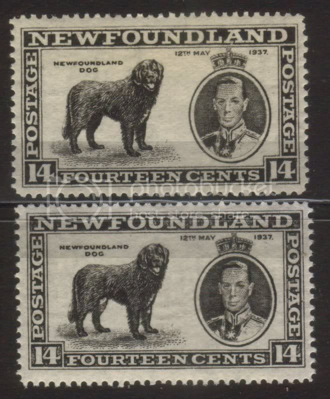 Image result for 1937 long coronation issue male dog variety