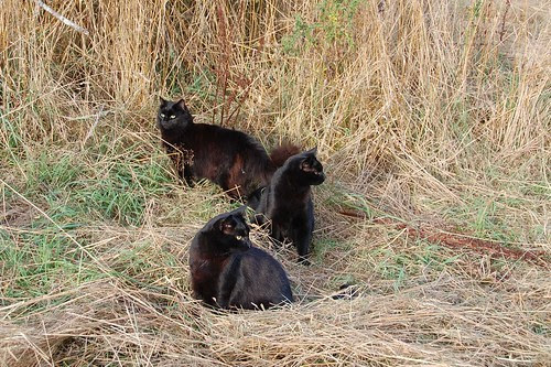 Cats on a walk in the hayfield