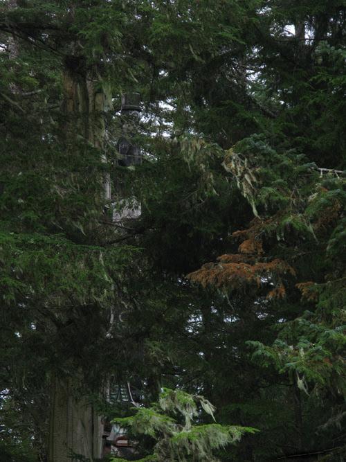totem poles at Kasaan Totem Park seen through trees, Kasaan, Alaska