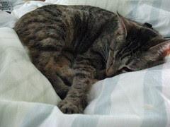 Maggie napping on Jeni