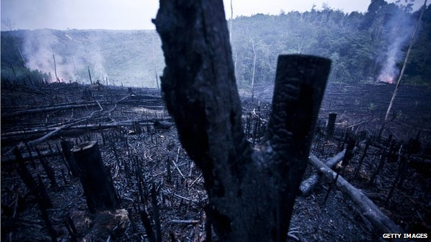 A patch of land being cleared by burning in Indonesia