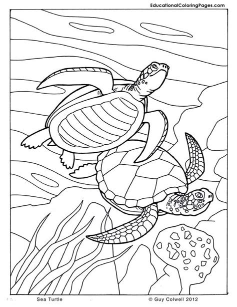 sea turtle coloring pages animal coloring pages  kids