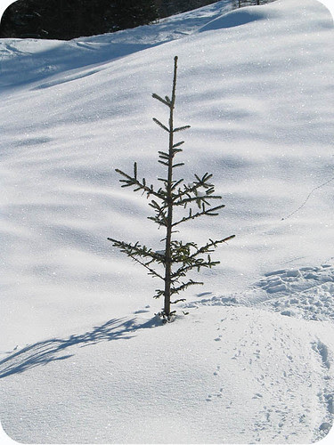White Winter Snow 3