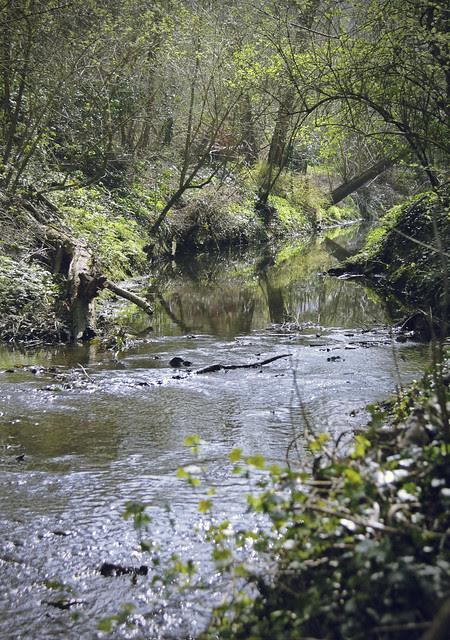 Hogsmill River near Malden Manor