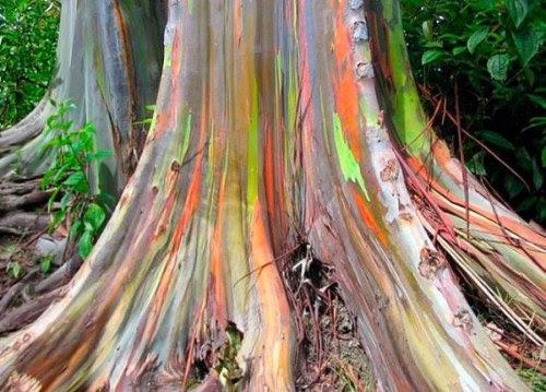 trees, 20