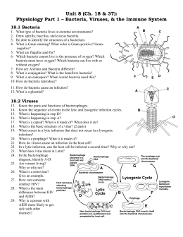 Chapter 18 Bacteria and Viruses worksheet