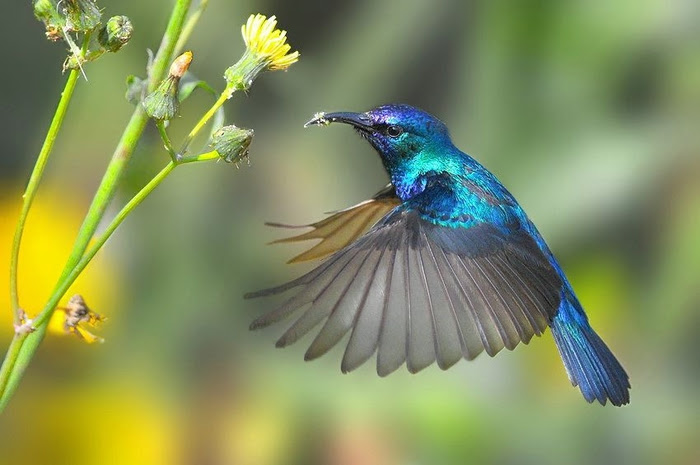 Bird_7 (700x465, 179Kb)