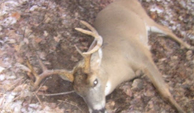 Whitetail Deer Hunting 8 Point Buck Kill Ny 2011