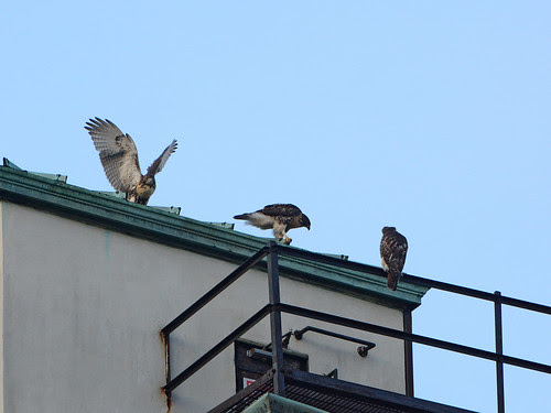 All Three Cathedral Fledges