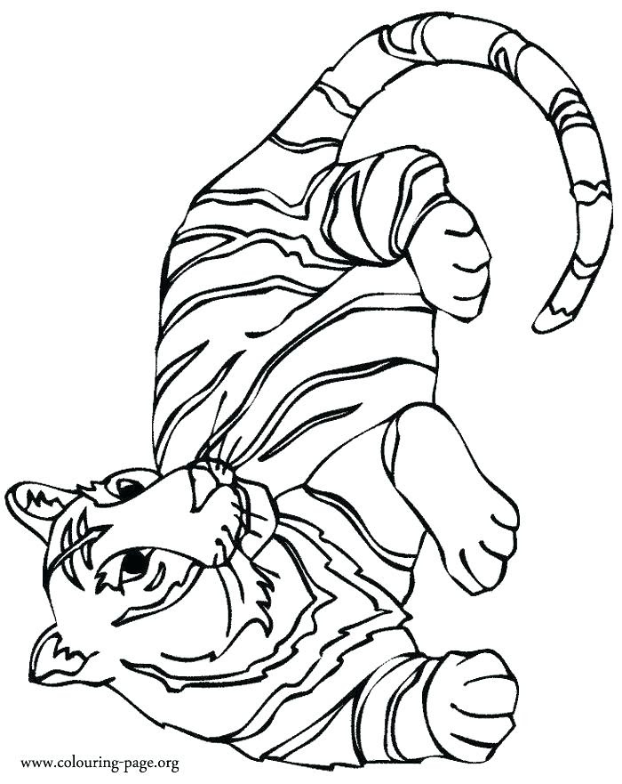 92 Colouring Pages Big Cats For Free