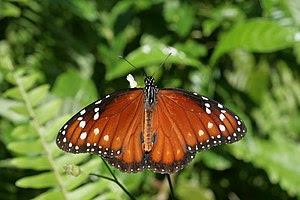 Soldier butterfly seen in Secret Woods nature ...