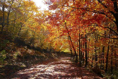 images autumn landscape greece centaurus nature