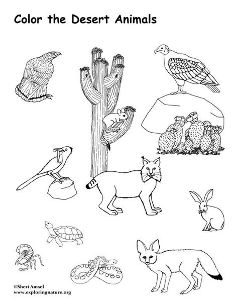 desert coloring pages  print coloring pages