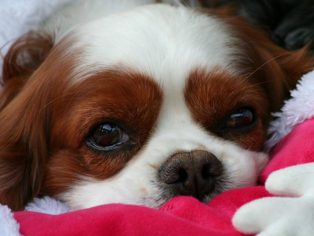 ドッグランの犬 壁紙写真集 無料写真素材