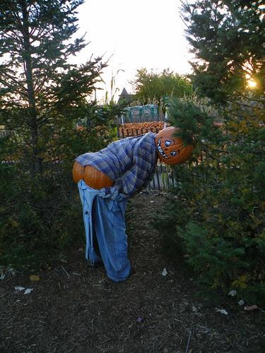 Bengstons Pumpkin Farm 2010