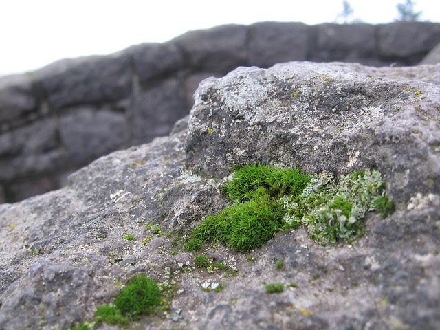 moss & stone, rocky butte