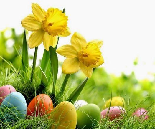 Frohe Ostern Bilder Lustig Whatsapp Imagez