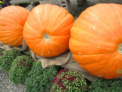 An October Farm Day! 12