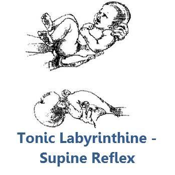 Tonic Labyrinthine Supine Ashley Arbuckle Flickr