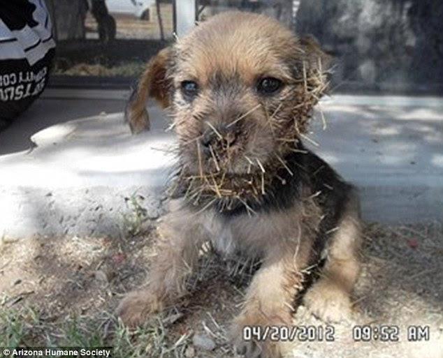 Cactus Jack: το σκυλακι... κακτος!