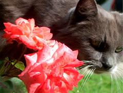 Miss Cat Flower,16  juillet 2005