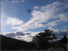 89 dynamic sky and tree