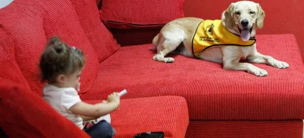 Robin, perro de asistencia