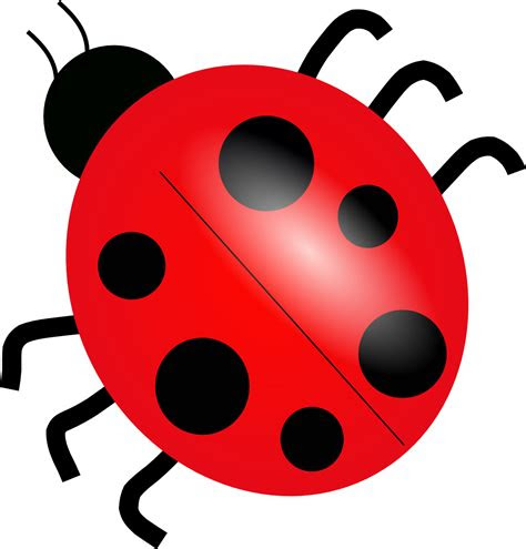 ladybug png picture  transparent png images
