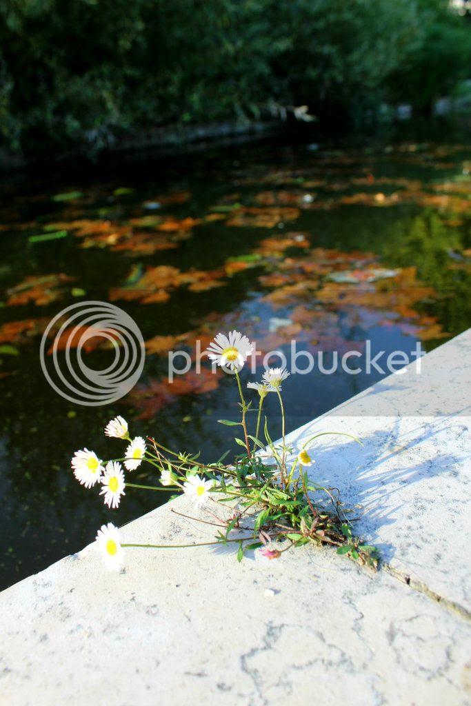 photo 001_zpskdggr23a.jpg
