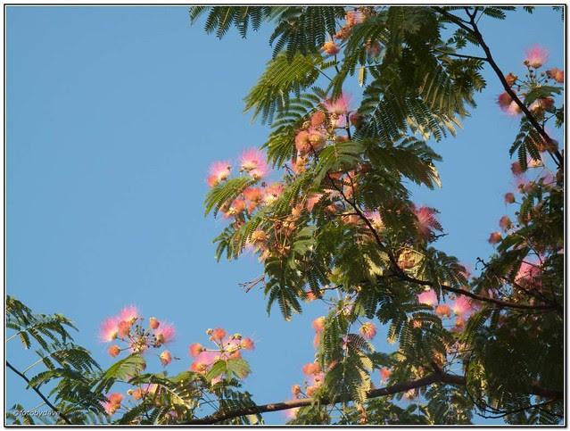 Neighborhood Walk Formosa Tree Explore Fotobydaves