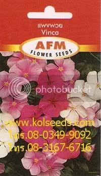 เมล็ดพันธุ์ดอกแพงพวย พันธุ์ลิตเติ้ลมิกซ์
