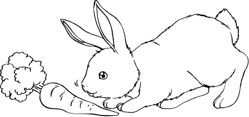 Disegni Da Colorare E Stampare Animali Coloratutto Website
