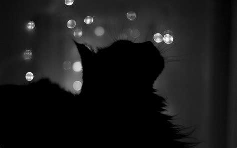 Black Cat Wallpaper 24144 1920x1200 px ~ HDWallSource.com