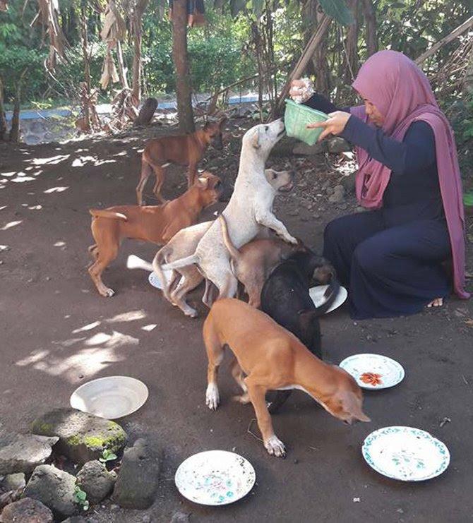 beri anjing makan