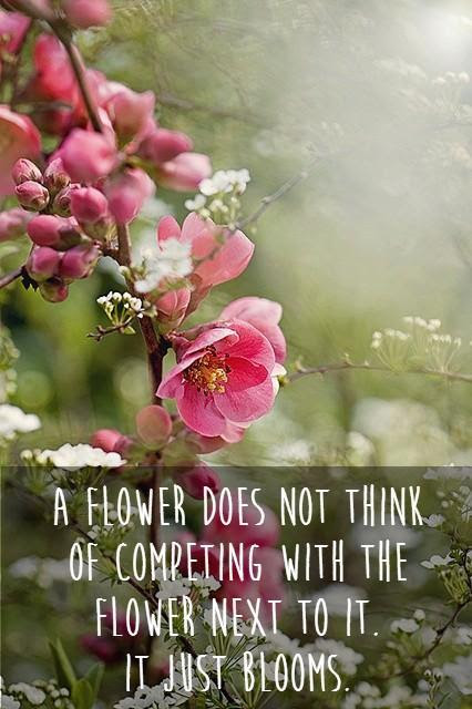 100 Quotes: Flower Quotes And Sayings  QuotesGram