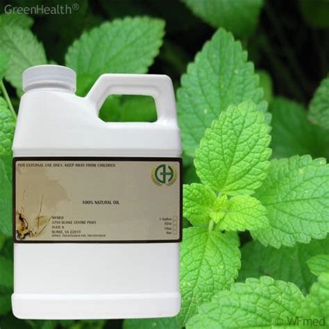 How To Use Peppermint Oil To Get Rid of Mice   InfoBarrel