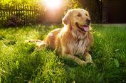 Ini Tanggapan Pemkot Bekasi Soal Surat Larangan Pelihara Anjing