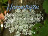 Homedaze