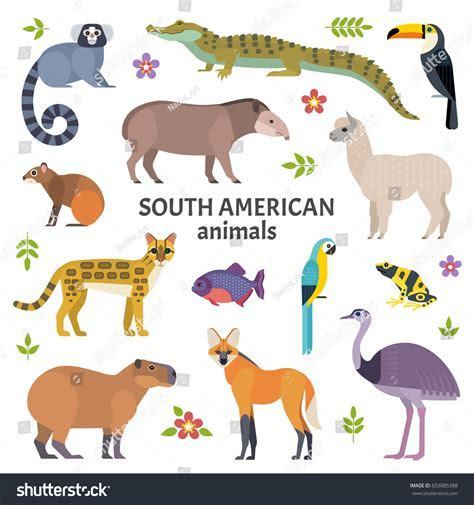 Animals South America Vector Illustration Exotic Stock Vector 653085388   Shutterstock