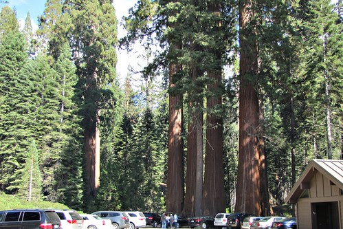 IMG_4060_Grant_Grove_Sequoia_NP.JPG