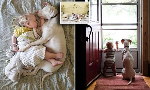 Photographs show rescue dog and toddler cuddling in Canada