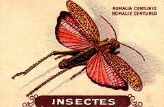 insecte 2