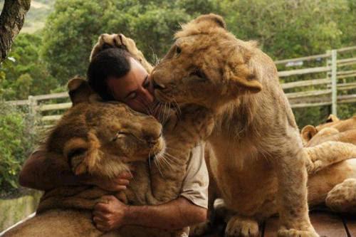 lion human kiss සඳහා පින්තුර ප්රතිඵල