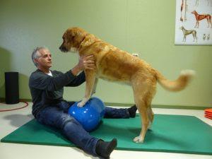 fortalecer os músculos do cachorro