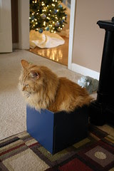 Jasper insisted that this box was just the right size