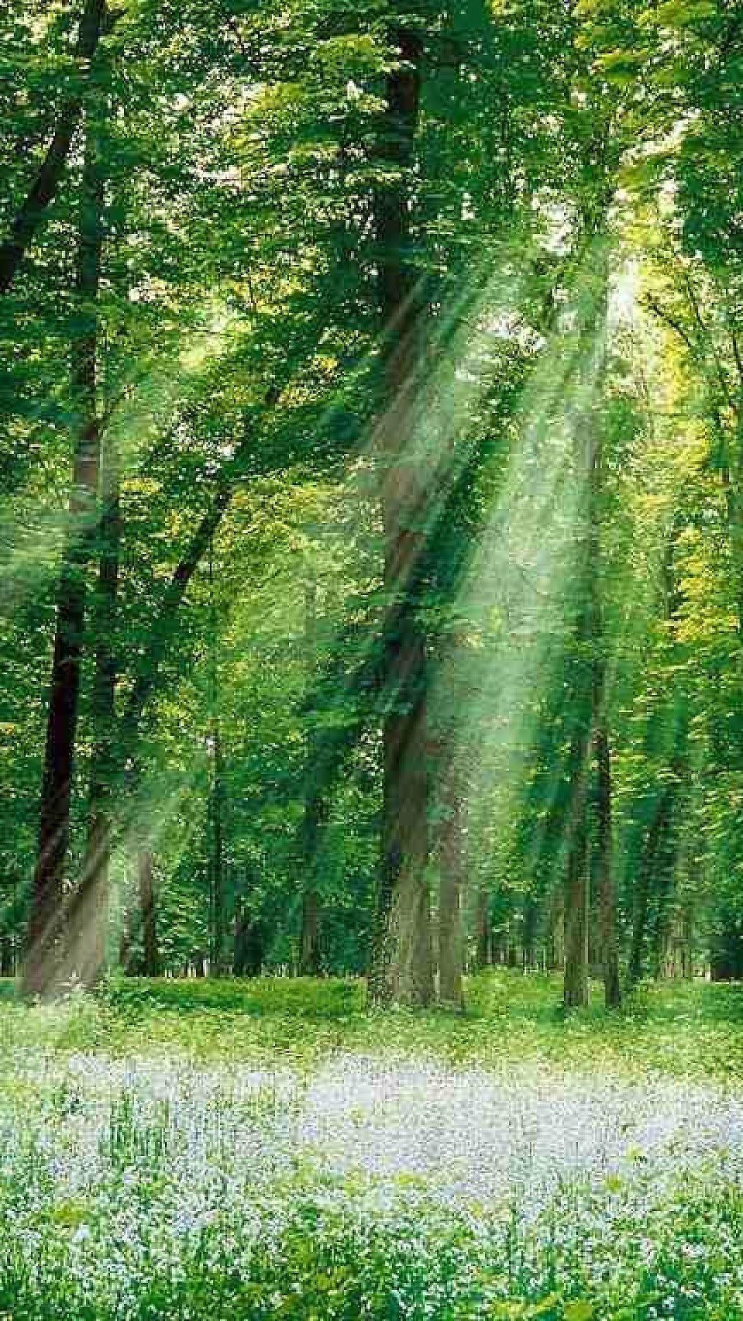 100 壁紙 森林 様々な画像の壁紙