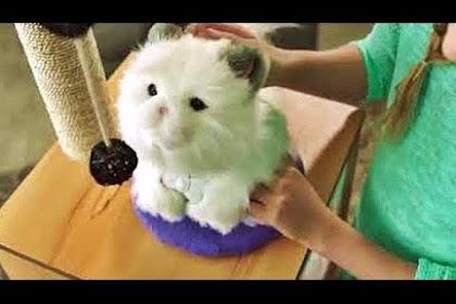 Kot Interaktywny Lulu