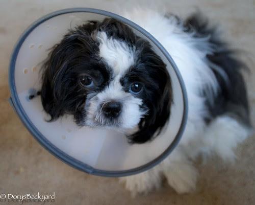 DogBlogWE101512